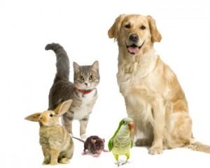 mutuelle santé pour animaux